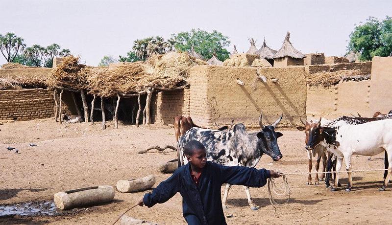 239 - West Africa 13 Mar-10 Apr 2000