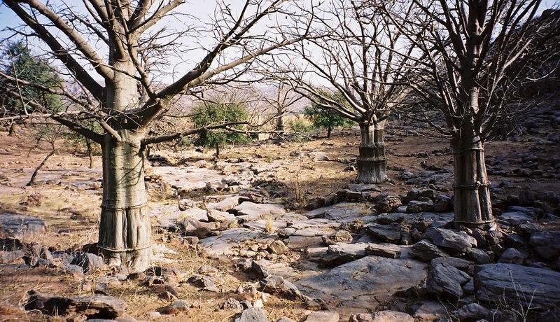 272 - West Africa 13 Mar-10 Apr 2000