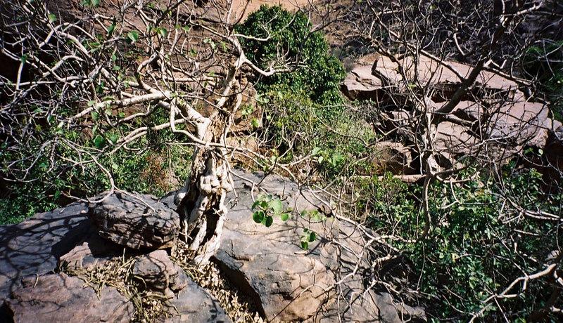 302 - West Africa 13 Mar-10 Apr 2000