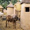 151 - West Africa 13 Mar-10 Apr 2000