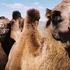 041 - 044 - Mongolia 28 Aug-9 Sep 2000 - Mongolia 28 Aug-9 Sep 2000