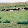 043 - 061 - Mongolia 28 Aug-9 Sep 2000 - Mongolia 28 Aug-9 Sep 2000