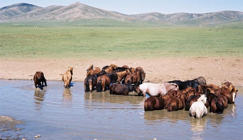 039 - 050 - Mongolia 28 Aug-9 Sep 2000 - Mongolia 28 Aug-9 Sep 2000