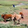 044 - 067 - Mongolia 28 Aug-9 Sep 2000 - Mongolia 28 Aug-9 Sep 2000