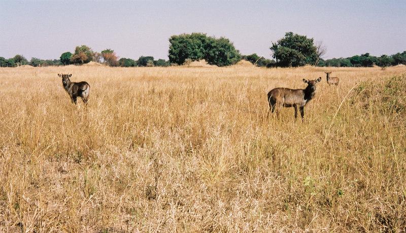 057 - Zambia 18-24 Jun 2001