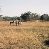 056 - Zambia 18-24 Jun 2001