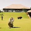 001 - Zambia 18-24 Jun 2001