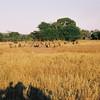 041 - Zambia 18-24 Jun 2001