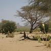316 - <br /> Day 9 - <br /> This sickly wadi is our lunch stop on day 9, halfway between Agadez & Timia <br /> (Page 22-Image 1)
