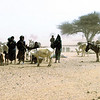 242 - <br /> Day 7 - <br /> Locals & livestock at a nearby local well <br /> (Page 17-Image 2)