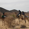 328 - <br /> Day 9 - <br /> Further down the road we come across some camels <br /> (Page 22-Image 13)