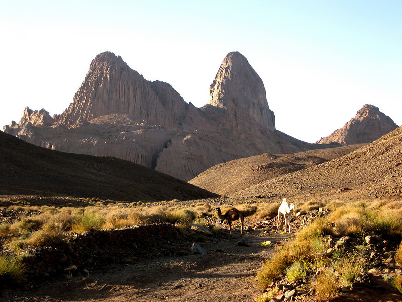 464 - <br /> Day 13 - <br /> Picturesque camels & flora of the Hogar   <br /> (Page 31-Image 14)