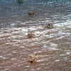 048 - 28 - 2007-11 Pointe Noire jpg
