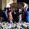 112 - 2007-11 Sao Tome