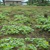 019 - 2008-09-22 - Sierra Leone