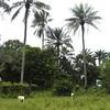 001 - 2008-09-22 - Sierra Leone