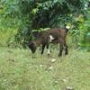 002 - 2008-09-22 - Sierra Leone