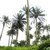 016 - 2008-09-22 - Sierra Leone