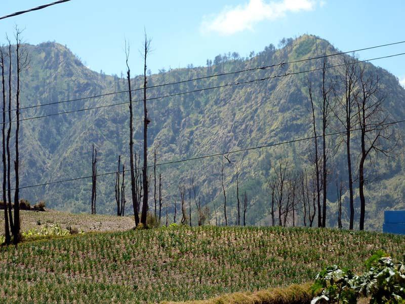 508 - 2009-09 - Indonesia (East Java)