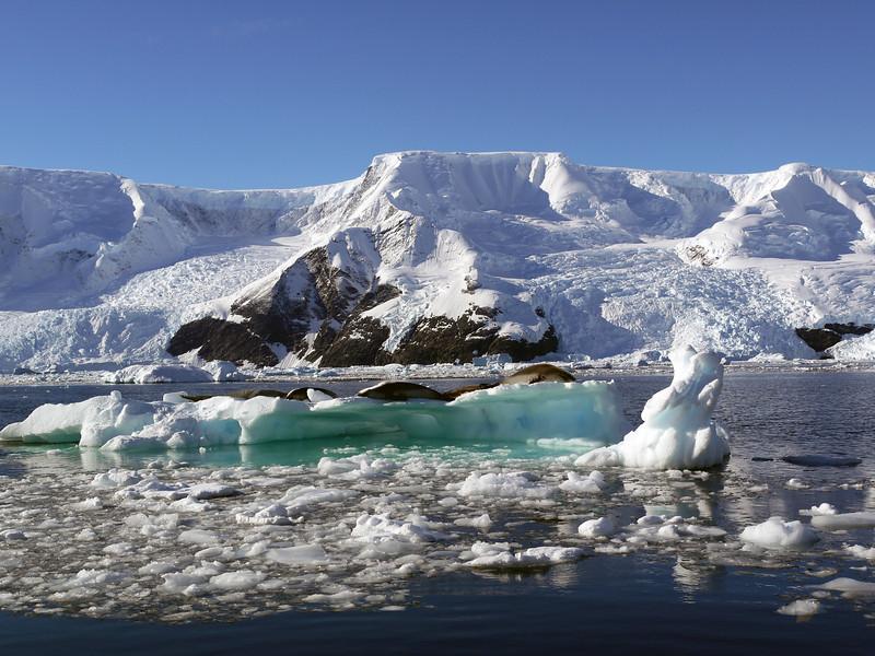 Neko Harbour, Mainland Antarctic Peninsula