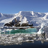 Neko Harbour, Mainland Antarctic Peninsula