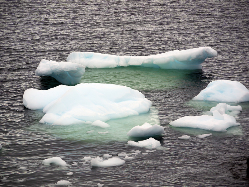 Unusual green icebergs in the bay at Detaille Island, Antarctic peninsula