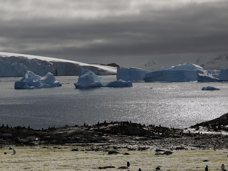 Penguin guano stained snowy hillside with massive icebergs in the bay at Cuverville Island, mainland Antarctic peninsula