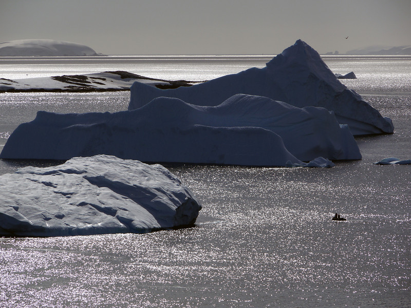 Massive icebergs in the bay at Cuverville Island, mainland Antarctic peninsula