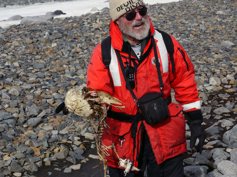 Tom Ritchie describes the demise of an unlucky penguin at the teeth of a leopard seal on the beach in Half Moon Island, South Shetland Islands, Antarctica