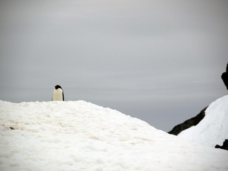 1294 - Detaille Island - 2011-02-21 - P1060983