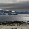 0695 - Cuverville Island - 2011-02-20 - P1060229