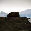 1329 - Detaille Island - 2011-02-21 - P1070053