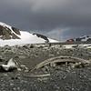 0232 - Half Moon Island - 2011-02-19 - P1050707