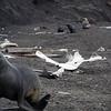 1628 - Deception Island - 2011-02-23 - P1070365