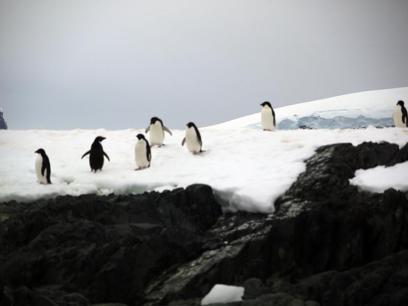 1305 - Detaille Island - 2011-02-21 - P1060998