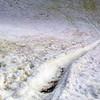 0690 - Cuverville Island - 2011-02-20 - P1060226