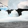 1303 - Detaille Island - 2011-02-21 - P1060994