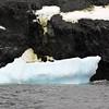 1299 - Detaille Island - 2011-02-21 - P1060989