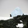 1309 - Detaille Island - 2011-02-21 - P1070006