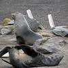 1664 - Deception Island - 2011-02-23 - P1070422