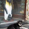 0006 - Ushuaia - 2011-02-17 - P1010452