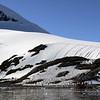 0472 - Neko Harbour - 2011-02-20 - P1050988