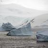 1259 - Detaille Island - 2011-02-21 - P1060947