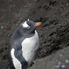 1721 - Deception Island - 2011-02-23 - P1070503
