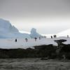 1319 - Detaille Island - 2011-02-21 - P1070035