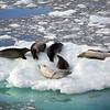 0373 - Neko Harbour - 2011-02-20 - P1050883
