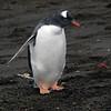 1674 - Deception Island - 2011-02-23 - P1070442