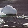 0585 - Neko Harbour - 2011-02-20 - P1060114