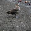 1620 - Deception Island - 2011-02-23 - P1070334