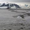 1288 - Detaille Island - 2011-02-21 - P1060972